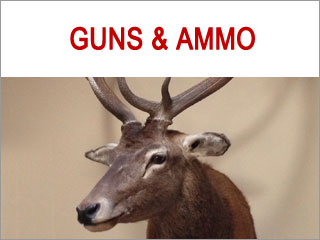 Guns and Ammo